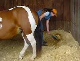 Qualified stable hand available to assist with daily stable duties *East Devon*
