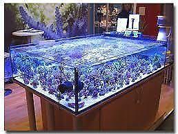 aquarium,décante de 150\180/140/90/80 gallons percé,starfire ect