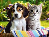 Free pet sitter,DBS Check,Many References from 4 yrs,Anywhere in Gtr London,Dogs Cats Rabbits etc