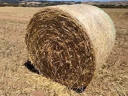 Oaten Hay Bales Two Wells Mallala Area Preview