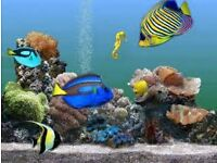 Want Traditional and Contemporary Aquariums in Romford!!