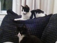 Male and female young cats