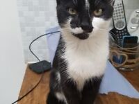 5 month old male kitten needs a new home, had injections