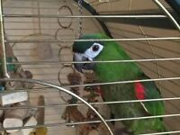 macaw parrot must go today