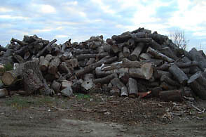 Stump Grinding - Wood and Construction Waste Removal Stratford Kitchener Area image 3