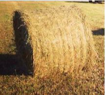 2016 Hay For Sale.
