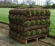 Grass sod Premium  Kentucky blue grass free delivery GTA 2.50
