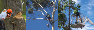 Ashley's Tree Lopping Services Kelmscott Armadale Area Preview