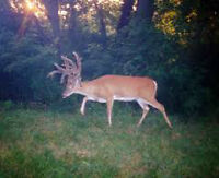 Excellent Guided Hunting Lease Available for 10 hunters Only