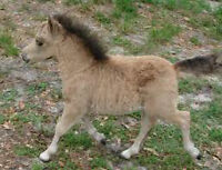 NEED BOARD FOR MINIATURE HORSE