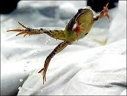 A Hopping Frog