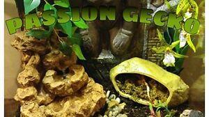 Refuge de gecko a crete