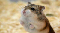 ~Adorable Hamster for SALE~