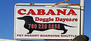 Cabana Doggie Daycare has 20% off all passes to January 30