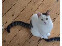 Missing cat (Brockley)