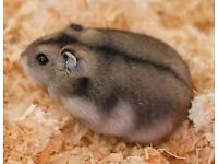 Hamster with cage and food