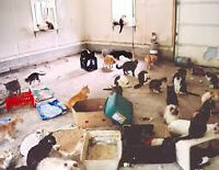 Extreme house cleaning service ``hoarders``