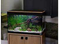 FLUVAL ROMA 90 4 WEEKS OLD FISH TANK FULL SETUP WITH CABINET