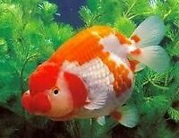 We take any unwanted fish,aquariums, tanks &accessories & others