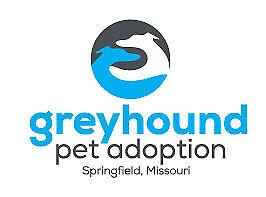 Greyhound Pet Adoption Springfield MO