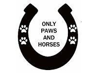 Dog Walking, Home Boarding, Small Animal & Horse Care *Only Paws & Horses Surrey*