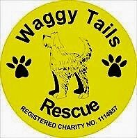 ANIMAL RESCUE CHARITY HAS PART TIME PAID VACANCY IN SHOP