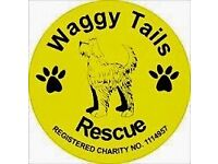 ANIMAL RESCUE CHARITY HAS VACANCY FOR FULL-TIME MEMBER OF THE WELFARE TEAM