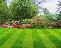 Spring Cleanup and Lawn Service