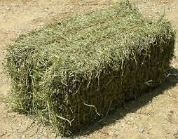 Wanted small bale hay for goats