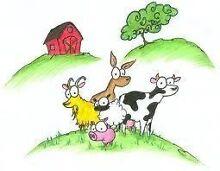 110 ACRES FOR UNWANTED FARM ANIMALS - SHEEP ETC Eudunda Goyder Area Preview