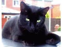 2 male black cats