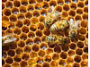 WANTED beekeeping equipment or bees Meidrim, Carmarthen