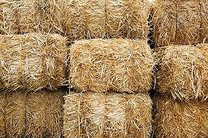 STRAW - LOOKING FOR STRAW OR CLEAN HAY