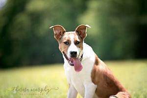 BOUNCY BOWSER WOULD LIKE A FOREVER HOME