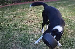Extreme Dog Toy