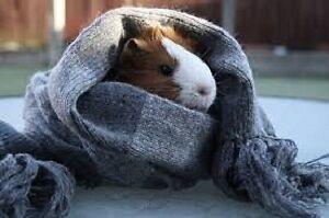 Pet Sitting Plus :)  !!!!! London Ontario image 5