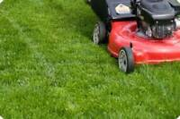 Mowing Starting @ $40 plus GST