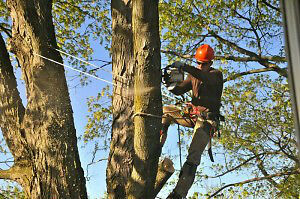 QUALITY TREE CARE SERVICES-PROFESSIONAL SERVICES-BUDGET PRICES