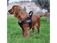 WANTED - accessories for puppy/dogs (toys, food, poo bags etc)