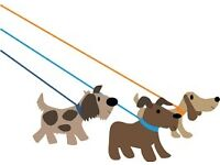 Dog Walker Required Chester