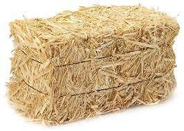 HAY, Quality, standing in paddock Burnie Burnie Area Preview