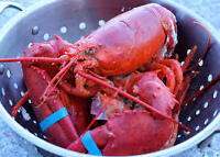 FRESH RED JUICY LOBSTERS