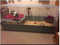 150cm indoor rabbit cage