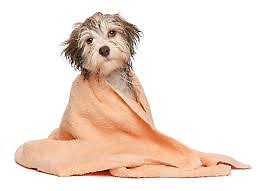 $15 dog baths.  EdgeWater Veterinary Hospital. Wanneroo Wanneroo Area Preview
