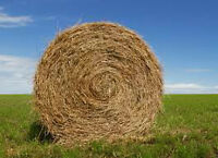 Straw for sale