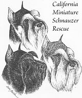 California Miniature Schnauzer Rescue