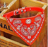 Awesome cat or small dog bandana collar Ferryden Park Port Adelaide Area Preview