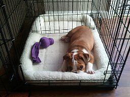 """Quiet Time Pet Bed Multiple Sizes from 22"""" to 48"""" London Ontario image 5"""