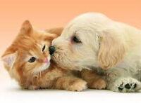 Garderie pour chiens/chats dans une maison privée