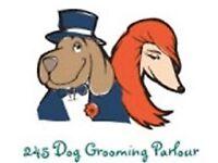 Dog Groomer/Grooming Parlour Basildon area